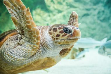 Tortue Aquarium de Biarritz