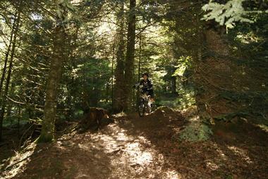 VTT en Barétous; Pascal Hourticq - Forêt
