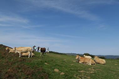 Vaches et marcheurs TS