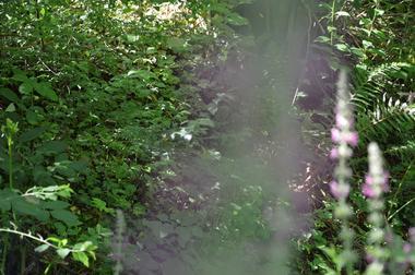 parcours découverte nature salies-de-béarn5
