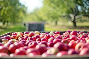 pommes-Pixabay