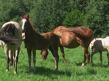 Elevage des Briards, chevaux et poneys de sport