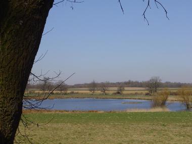 LA CABANE AUX SECRETS vue sur les étangs du Der et les oiseaux