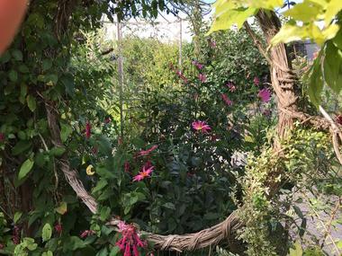 Jardin de Maëlys(3)