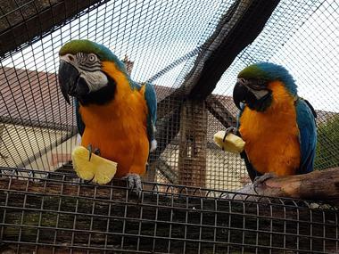 La Ferme aux Oiseaux Exotiques - Athis©Mme Brisson10_Fotor