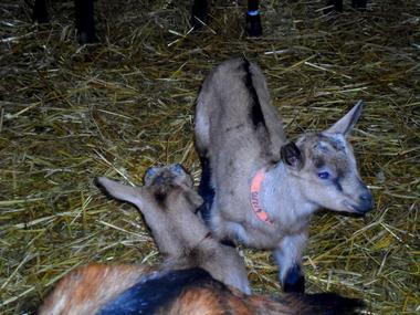 Chèvrerie de Nesle la Reposte