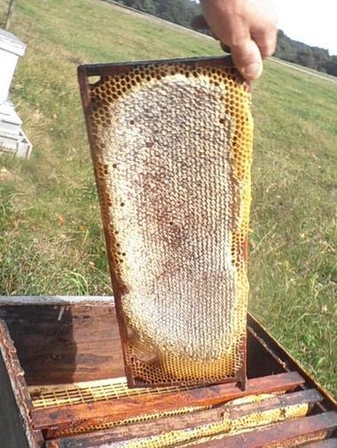 L'abeille Chercheuse miel - Lac du Der