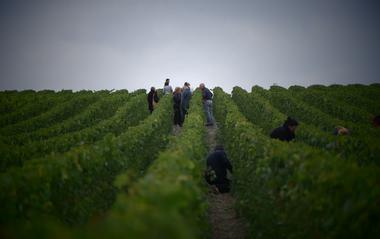 Escapade dans les vignes