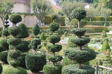 Le topiarium d'ifs - Château du Grand Jardin - Joinville