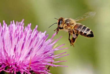Blog-Humanoides-robot-insecte-abeille-green-brain-pollinisation