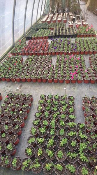 Plants - pépinière du conflent