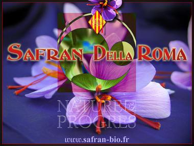 Safran della Roma 1