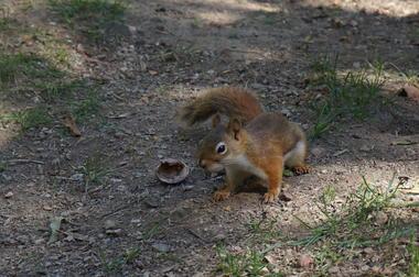 ecureuils 3