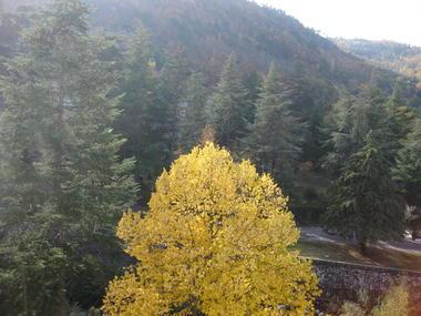 eden automne