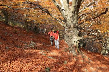 rando sous hetre automne