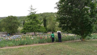04. Blandine Margoux - Iris - Visite du jardin - light