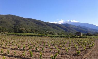 04. Les vignerons en terres romanes - Photo sur FK