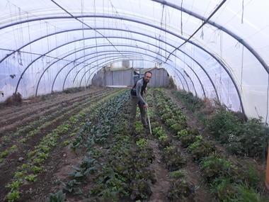 Entretien champs de salades