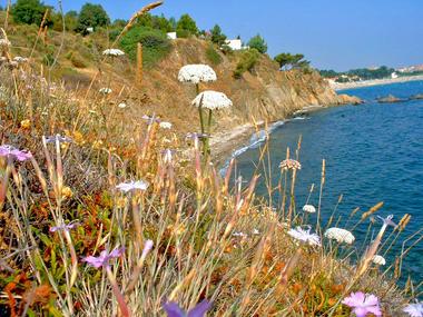 6_vtt_vegetation_sur_les_falaises_de_porteils_argeles