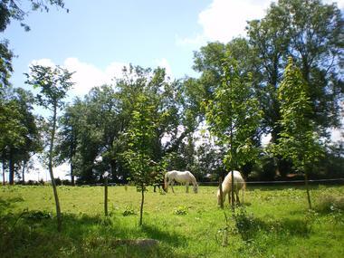 Sainte Foy - La Chaumière - Parc Chevaux - Mme Marlier