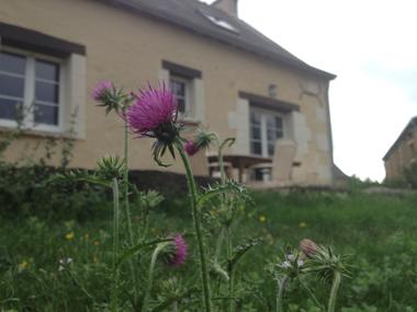 Chardon back garden