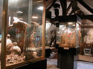 Petit Musée Faune Locale (1) (Large)