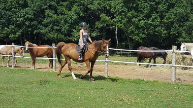 apprendre et progresser toujours au milieu des chevaux