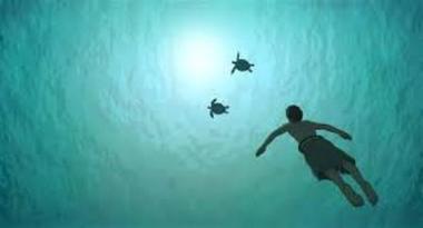 film-la-tortue-rouge-studio-ghibli-baugé-en-anjou