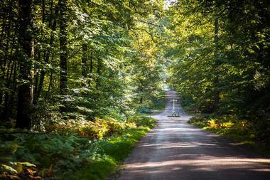 foret-de-berce-sarthe-velo-route