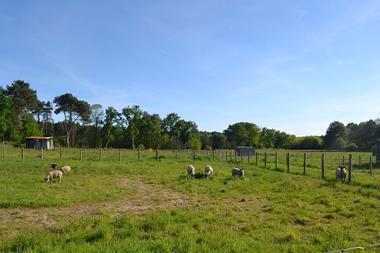 les-moutons