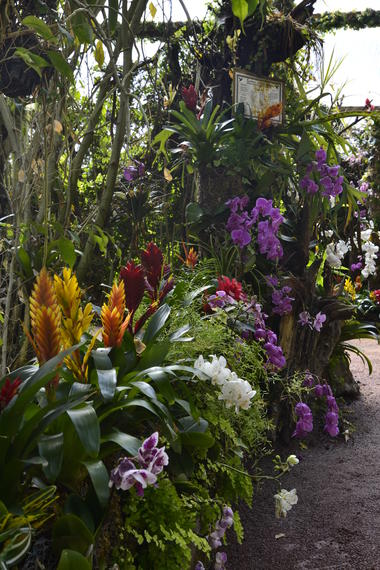 Parc floral court d'aron (3)