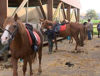 etrier-fontenaisien-centre-equestre-85200-fonenay-le-comte-5