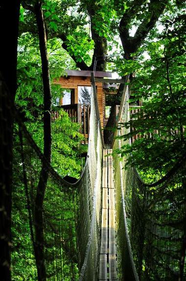 Cabanes dans les arbres