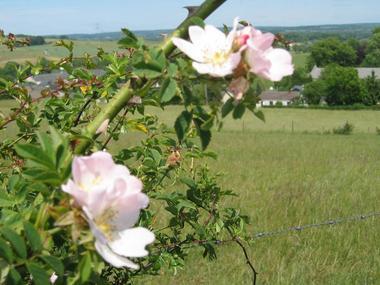 fleurs sur le sentier de la boulette