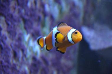Aquarium-de-Vannes-Morbihan-Bretagne-Sud
