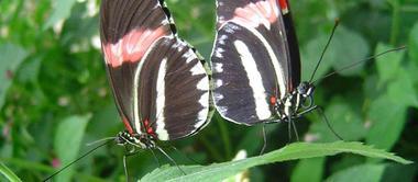 jardin-aux-papillons-morbihan-bretagne-sud