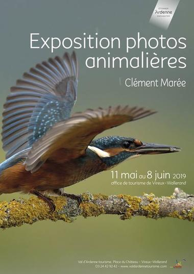 Photographies animalières
