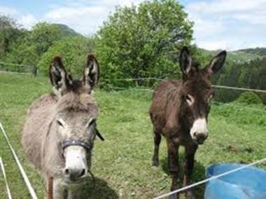 2 ânes