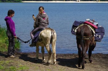 Ane au lac des Vieilles Forges