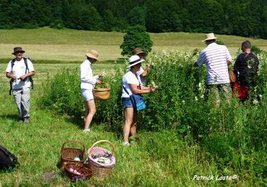 Cueillette et cuisine des plantes sauvages