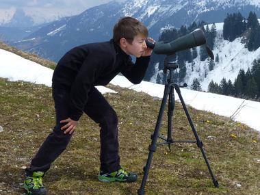 Observation faune