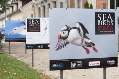montier en der festival photo animaliere nanture francis goussard 7.