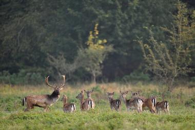 champagne 52 nature parcs animaliers parc aux daims phl 7101.