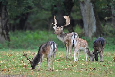 champagne 52 nature parcs animaliers parc aux daims phl 7260  rec.