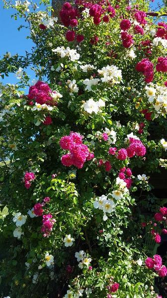 Les fleurs dans le jardin