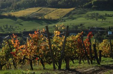 champagne 52 coiffy terroir scea vin de coiffy 3 mdt52.