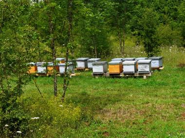 champagne 52 mandres la cote gastronomie miel rucher mdt52 1001 ruches.