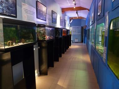 Maison de l'eau et de la pêche - Malestroit - Morbihan
