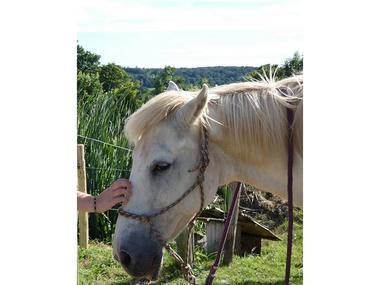 les-chevaux-du-vent-la-claie-des-landes