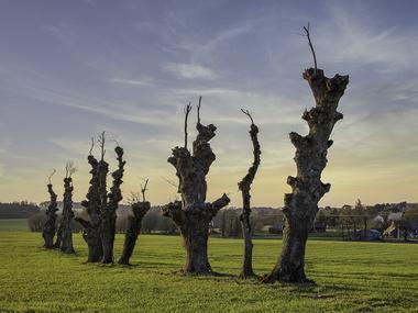 Paysage Loyat - exposition paysages du territoire - Ploërmel